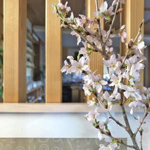 cherry_blossom_entrance_spring_myhome_wood.jpg